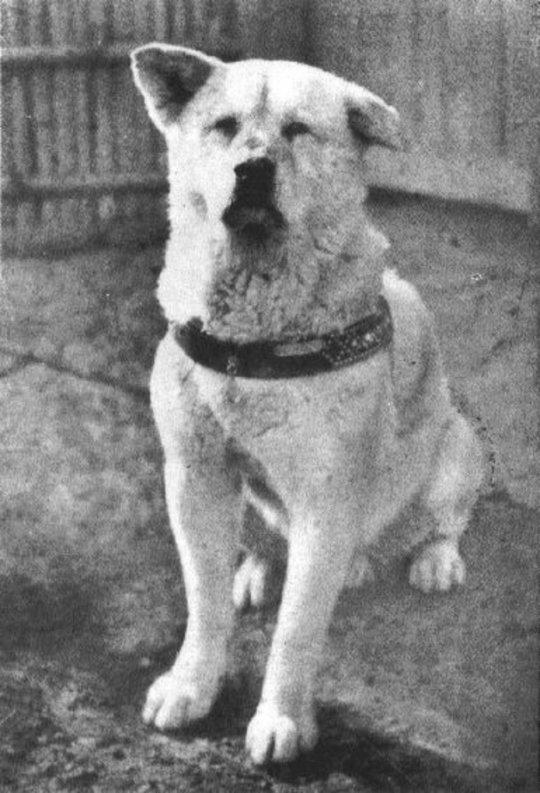 Hachiko – The loyal Dog