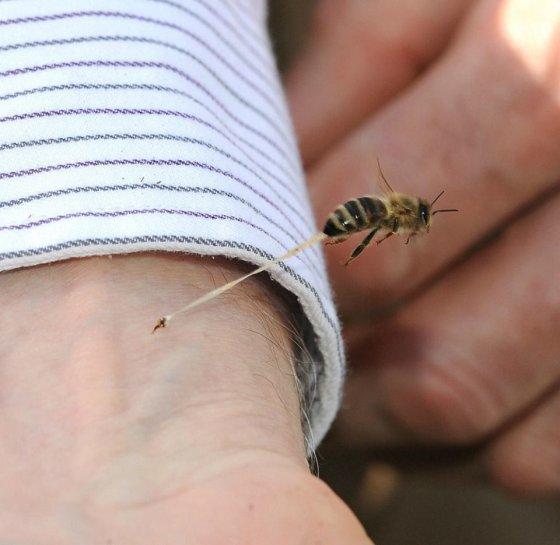 ფუტკრის ნესტარი