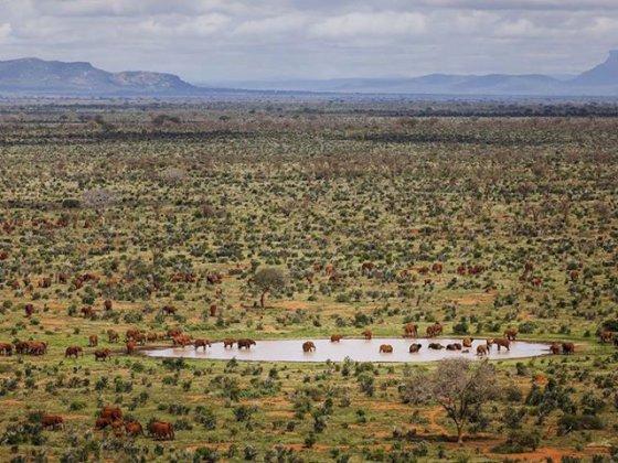 წითელი სპილოები