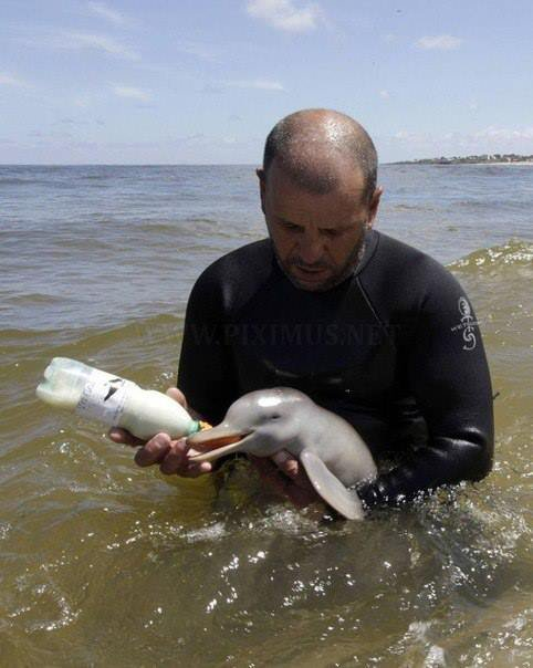 პატარა დელფინს აჭმევს