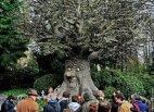 ზღაპრული ხე ნიდერლანდებში
