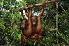 ერთი ამათ დამიხედეთ, მართლა მაიმუნები არ არიან?