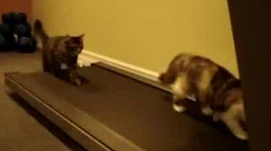 კატები სარბენ ბილიკზე დარბიან