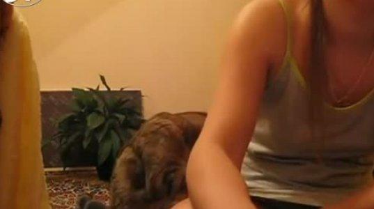 კატას  ასიამოვნებს