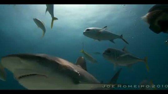 ზვიგენების მეფე