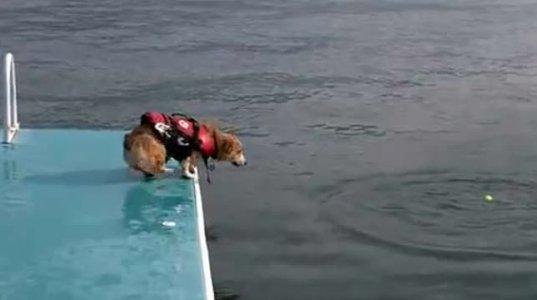 ძაღლმა ცურვა არ იცოდა და ისწავლა