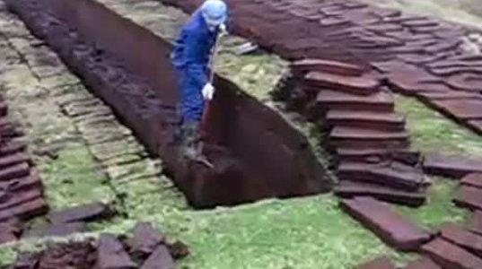ნახეთ მიწას რას უშვრებიან
