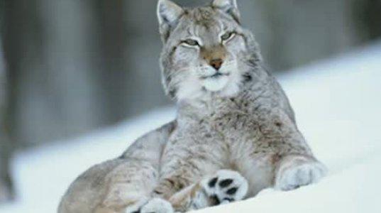 ყველაზე ლამაზი ცხოველები