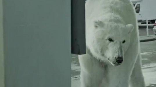 უსახლკარო თეთრი დათვი