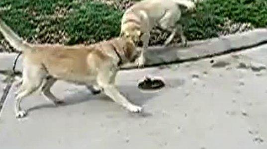 ძაღლები გველის წინააღმდეგ